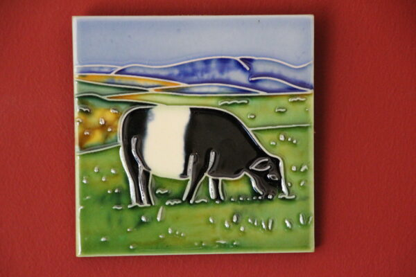4x4 Belted Galloway